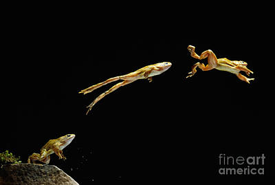 Photograph - Common Frog Leaping by Stephen Dalton