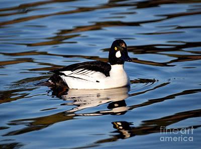 Wildlife Photograph - Common Goldeneye Duck 3 by Terry Elniski