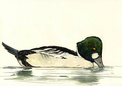 Common Goldeneye Duck Art Print by Juan  Bosco