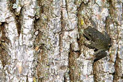 Water Droplets Sharon Johnstone - Common Gray Treefrog 3 by Adam Kimpton