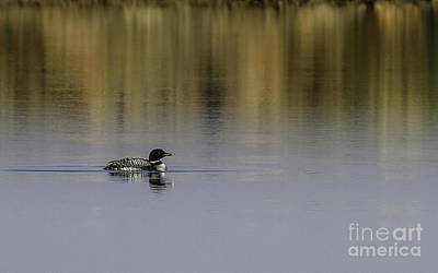 Photograph - Common Loon by Royce  Gideon