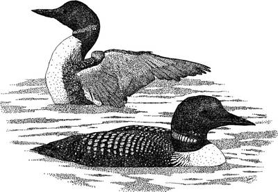 Loon Photograph - Common Loons by Roger Hall