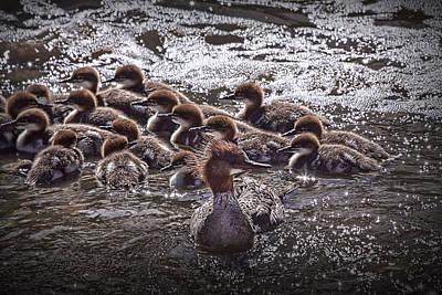 Stellar Interstellar - Common Merganser with chicks by Randall Nyhof