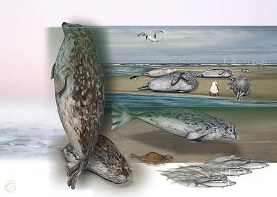 Painting - Common Seal - Harbour Seal - Harbor Seal - Habitat - Nature Interpretive Panel - Zoo Tafel  by Urft Valley Art