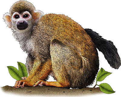 Photograph - Common Squirrel Monkey, Illustration by Roger Hall