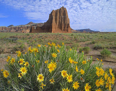 Photograph - Common Sunflowers And  Temple Of The Sun by Tim Fitzharris