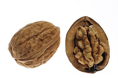 Zen - Common walnut 7 by Arterra Picture Library