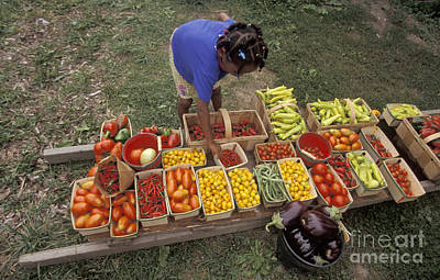 Photograph - Community Garden Harvest by Jim West