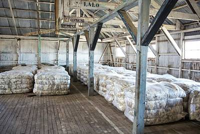 Compacted Sheep Fleeces In Storage Art Print by Peter J. Raymond