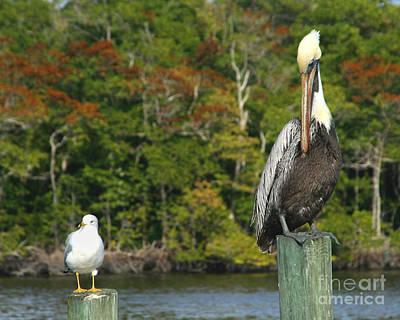 Photograph - Companion Birds by Heidi Hermes