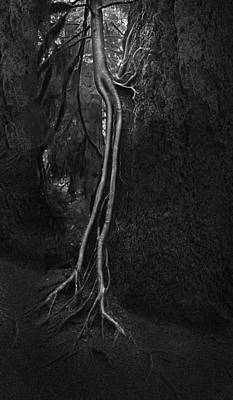 Tree Roots Photograph - Companion by Naman Imagery