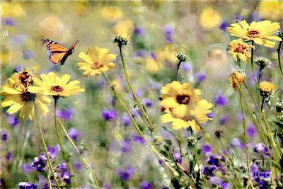 Photograph - Compliments To The Butterfly by Tom Griffithe