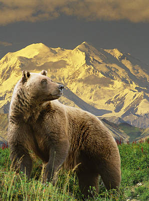 Composite Grizzly Stands On Tundra With Art Print by Michael Jones