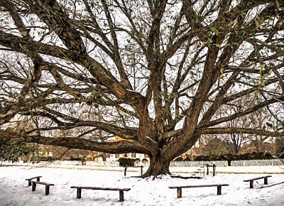 Photograph - Compton Live Oak by Jerry Gammon