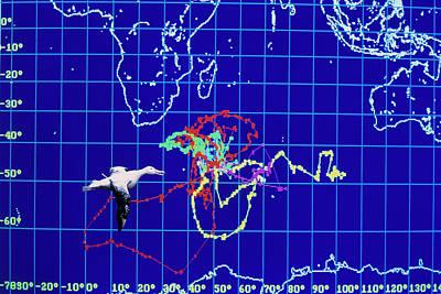 Computer Monitor View Of Albatross Movements Art Print