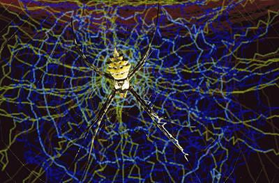 Computer Simulation Of A Spider Art Print by Heidi & Hans-Juergen Koch