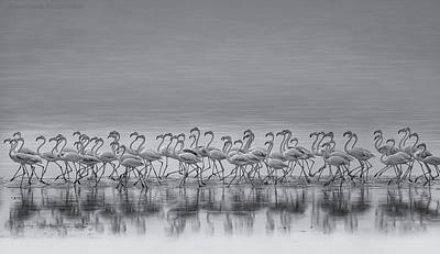 Sea Bird Wall Art - Photograph - Comrades by Ahmed Thabet