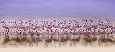 Shore Birds Photograph - Comrades In Color by Ahmed Thabet