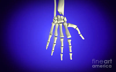 Human Joint Digital Art - Conceptual Image Of Bones In Human Hand by Stocktrek Images