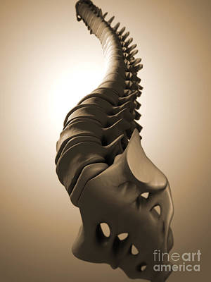 Digital Art - Conceptual Image Of Human Backbone by Stocktrek Images