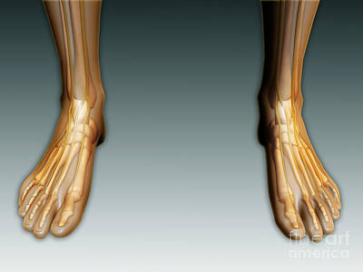 Human Joint Digital Art - Conceptual Image Of Human Legs And Feet by Stocktrek Images