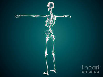 Conceptual Image Of Human Skeletal Print by Stocktrek Images