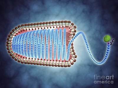 Nucleoprotein Digital Art - Conceptual Image Of Lyssavirus by Stocktrek Images