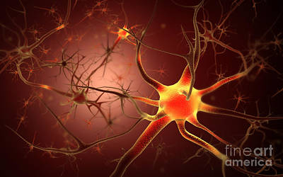 Neuroscience Digital Art - Conceptual Image Of Neuron by Stocktrek Images