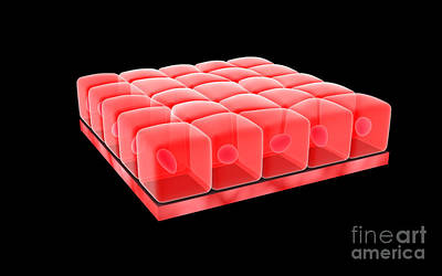 Digital Art - Conceptual Image Of Simple Cuboidal by Stocktrek Images