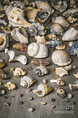 Photograph - Conch Background by Carlos Caetano