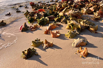 Photograph - Conch Collection by Jola Martysz