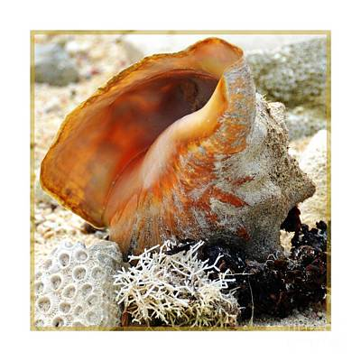 Photograph - Conch Shell And Friends 2 by Darla Wood