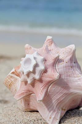 Conch Shell Print by Brandon Tabiolo