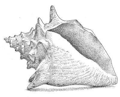 Beach Drawings - Conch Shell by Christy Beckwith