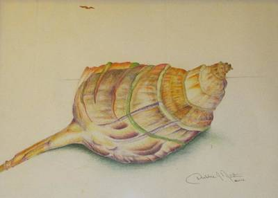 Painting - Conch Shell by Debbie Nester