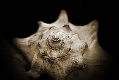 Firefighter Patents Royalty Free Images - Conch Shell Royalty-Free Image by Jessica Brawley