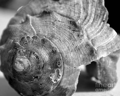Photograph - Conch Shell by Kathy Flood