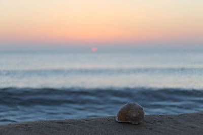 Photograph - Conch Shell Sunrise by Robert Banach