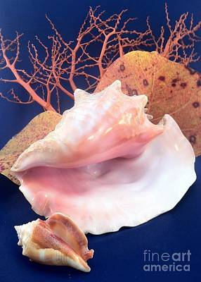 Photograph - Conch Still Life by Barbie Corbett-Newmin