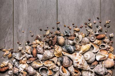 Conchs And Shells Print by Carlos Caetano