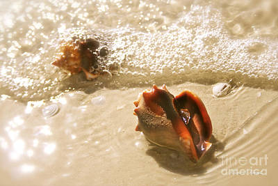 Natural Finish Photograph - Conchs In Surf 2 Antique by Olivia Novak
