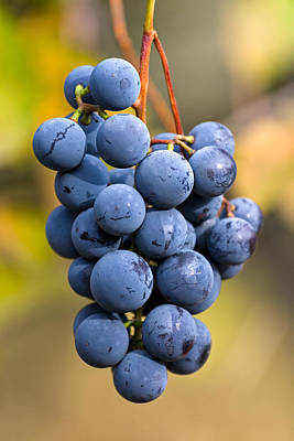 Concord Grapes Art Print by Michael Russell
