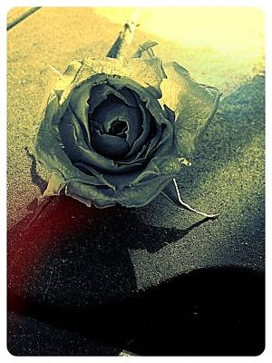 Photograph - Concrete Rose by Lee Farley