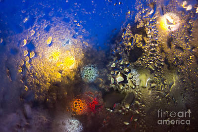Condensation 88 - Reef Art Print