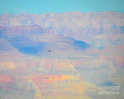 Photograph - Condor Series A by Cheryl McClure