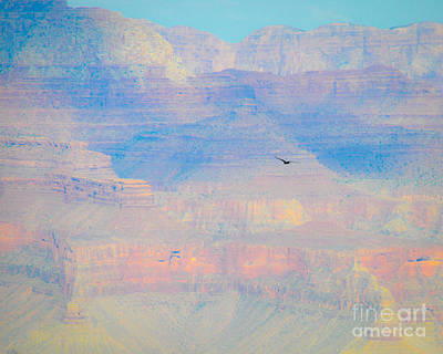 Photograph - Condor Series B by Cheryl McClure