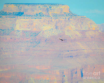 Photograph - Condor Series D by Cheryl McClure