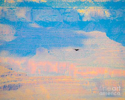 Photograph - Condor Series E by Cheryl McClure