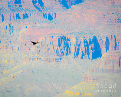 Photograph - Condor Series G by Cheryl McClure