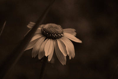 Gardening Photograph - Princess Coneflower And Her Crown by Lesa Fine